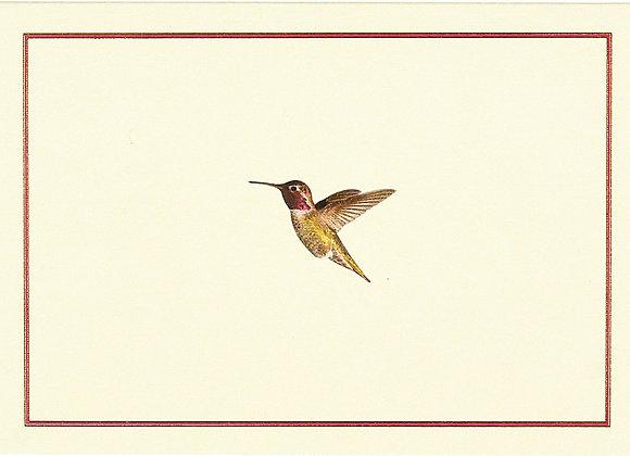 Hummingbird Flight Blank Boxed Cards