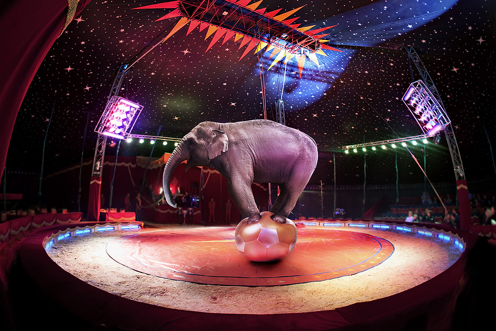 Photo of circus elephant balancing on a ball