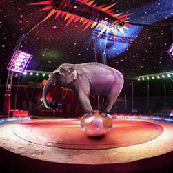 הפיל הורוד