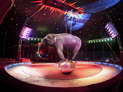Lessons From My Time as a Circus Elephant