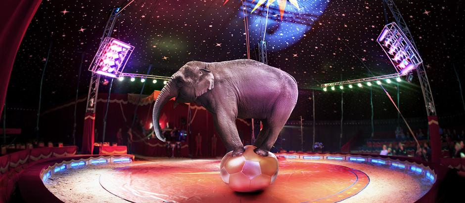 Animali al circo: no, grazie!