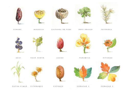 Illustration for Natura