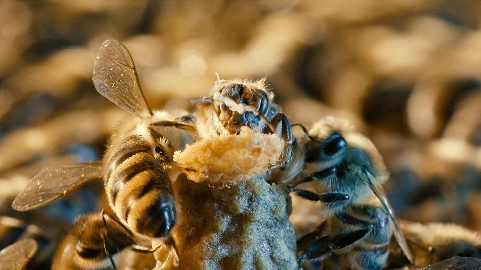 Inte bara honung