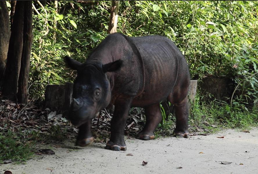 Sumatran Rhino Sanctuary 2.png