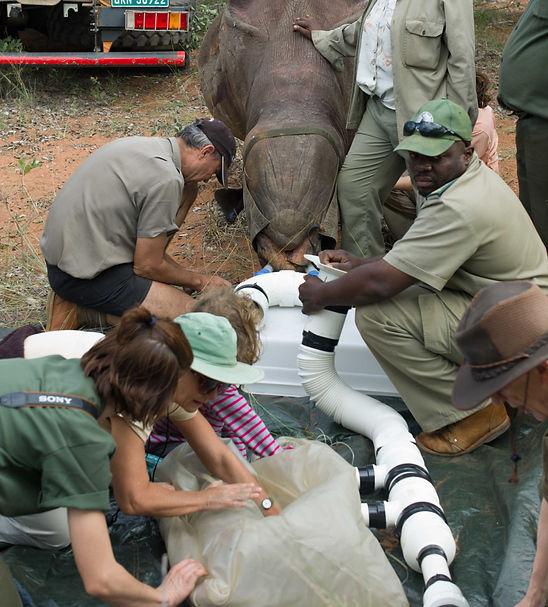 Hanging Rhino Gas Collection1_edited.jpg