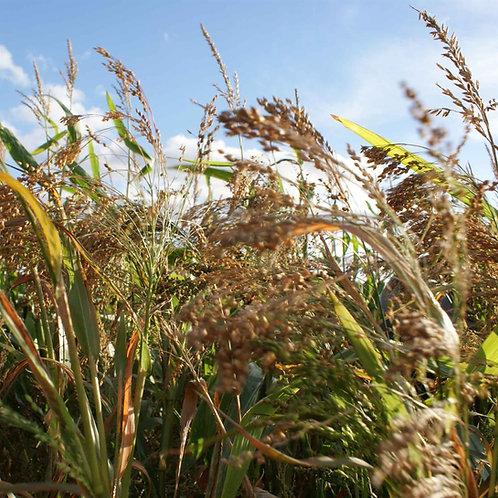 Niko Seed Mix (5kg per acre)