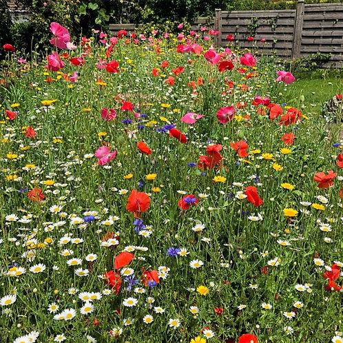 AC1 Cornfield Annual Wildflower Seed Mix 100%