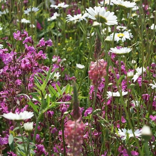 P3 Calcareous Soils Wildflower & Grass Seed Mix 80:20