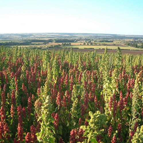 Quinoa Seed Mix (4kg per acre)
