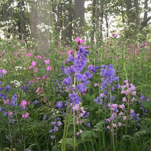P5 Woodland & Heavy Shade Wildflower & Grass Seed Mix 80:20