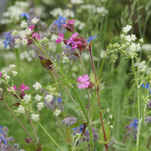 P4 Hedgerows Wildflower & Grass Seed Mix 80:20