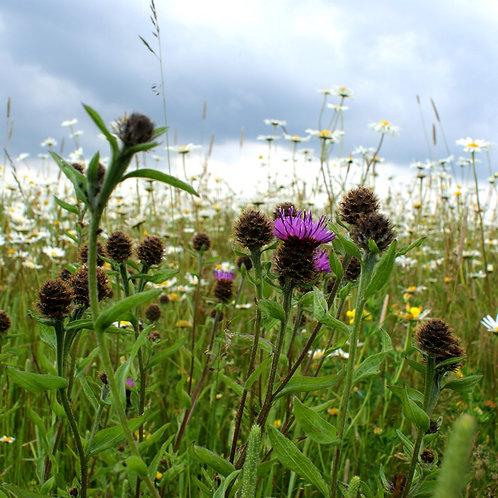 Organic Flower Rich Margins Seed Mix (Wild Flower Opt) (8kg per acre)