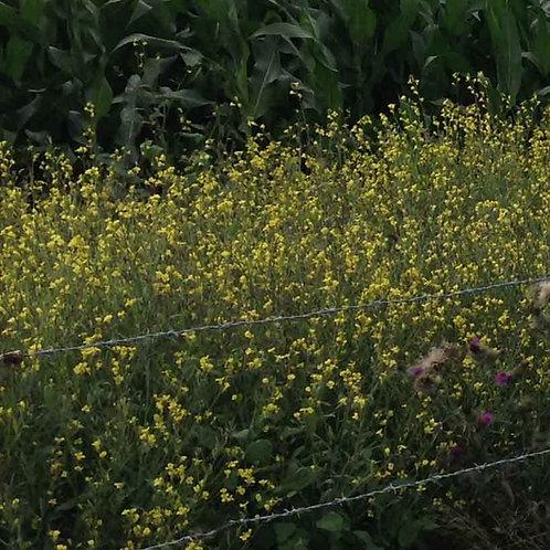 Jonty Seed (3kg per acre)