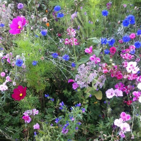 HC10 The Bees Knees Wildflower Seed Mix 100%