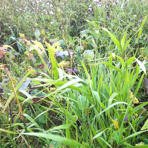 Bushy Seed Mix (11kg per acre)
