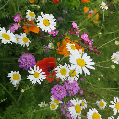 HC7 Butterfly Paradise Wildflower Seed Mix 100%