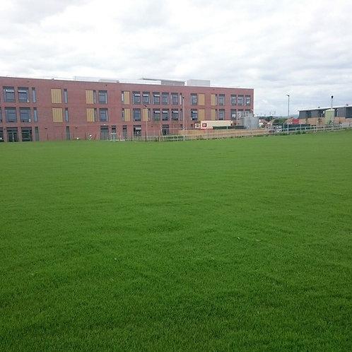 20kg - Lifesaver Grass Seed Mix