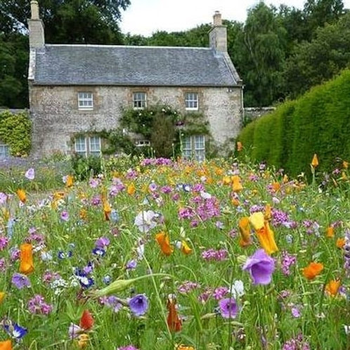 HC4 Dwarf Meadow Wildflower Seed Mix 100%