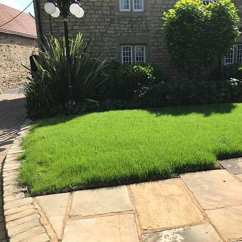 Organic Lawn Grass Seed Mix (70% Organically Produced)