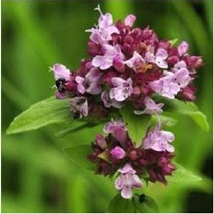 Wild Marjoram Wildflower Seed (Origanum Vulgare)