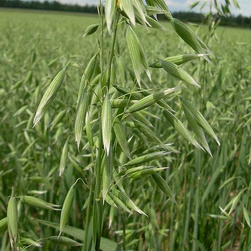 Oat Seed (75kg per acre) (EFA)
