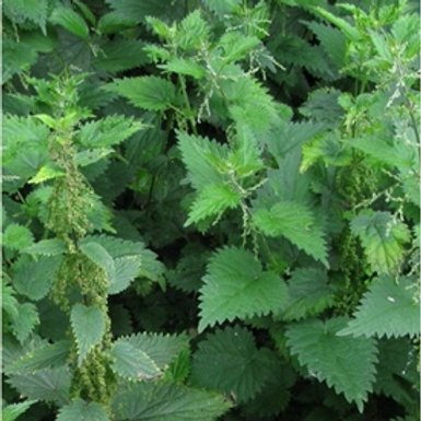 Nettle Wildflower Seed (Urtica Dioica)