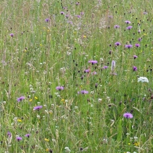 P6 Damp Loam Wildflower & Grass Seed Mix 80:20