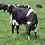 Thumbnail: NZ Cool Graze Grass Seed Mix (Acre Pack)