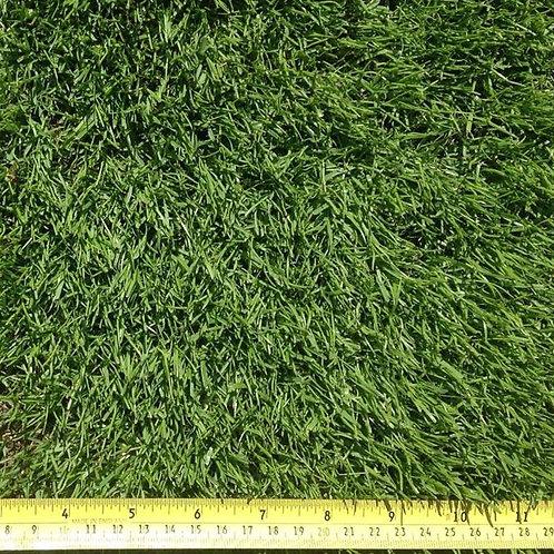 HM All American Dark Green Lawn Grass Seed Mix