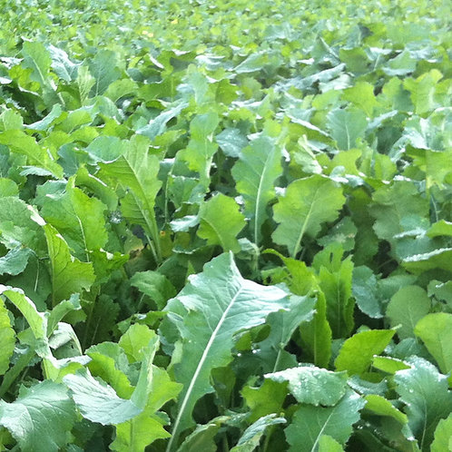 Flying Start Seed Mix (4kg per acre)