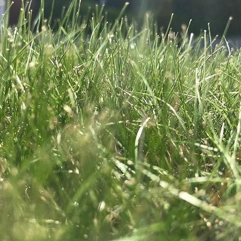 HL.10 Heathland, Acidic & Peat Soils Grass Seed Mix (HL10)