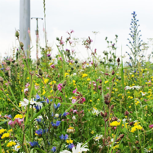 AP3 Colour Bright Wildflower Seed Mix 100%