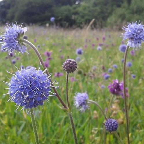 P1 Acid Soils Wildflower & Grass Seed Mix 80:20