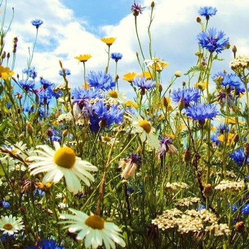 AP1 Premium Wildflower & Grass Seed Mix 80:20