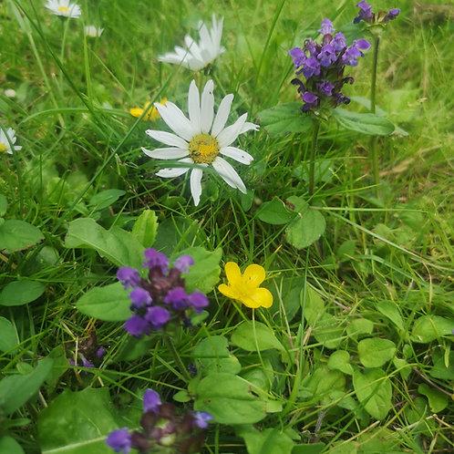 P8 Flowering Lawn Wildflower Seed Mix 100%
