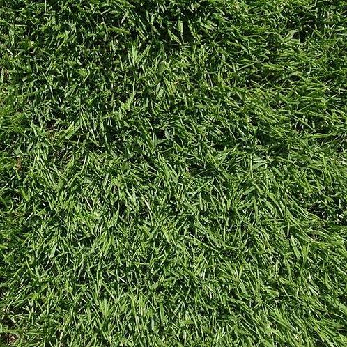 20kg - HPG CSI Turf Perennial Greens (+ Creeping Rye) Grass Seed Mix