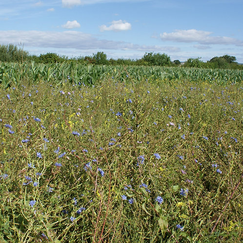The Syndicate Seed Mix (5kg per acre)