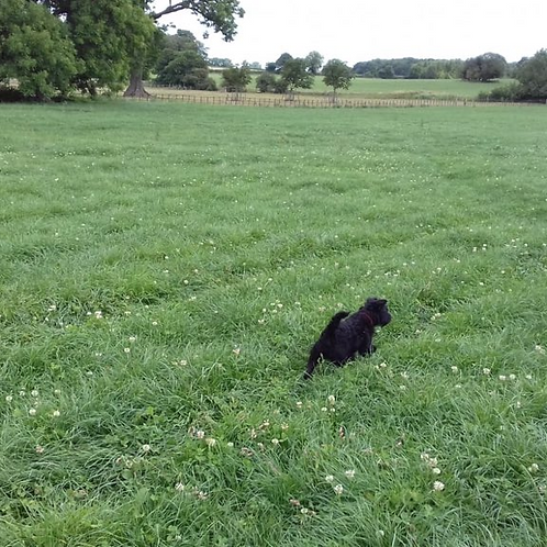 HM.26C Conqueror Long Term Grass Seed Mix with Clover (Acre Pack)