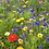 Thumbnail: HC2 Candy Wildflower Seed Mix 100%