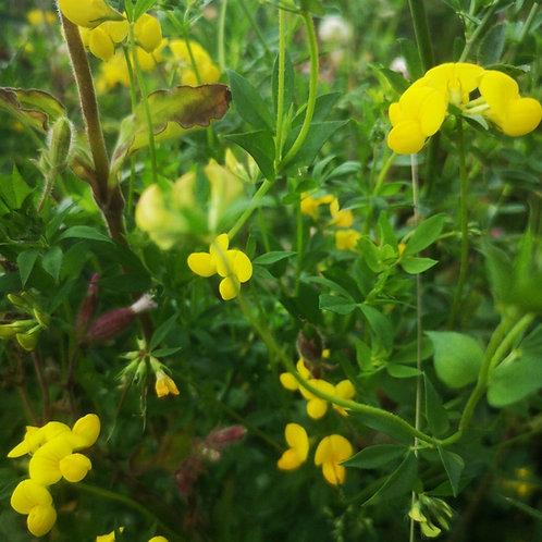 Birdsfoot Trefoil Seed (Agri) (Lotus Corniculatus) (3kg per acre)