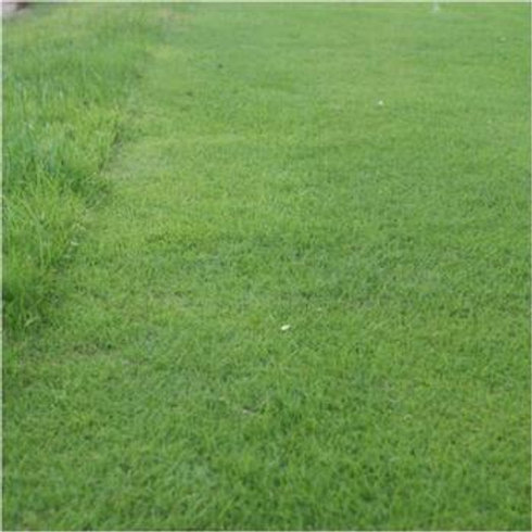 20kg - HM Fescue Grass Seed Mix