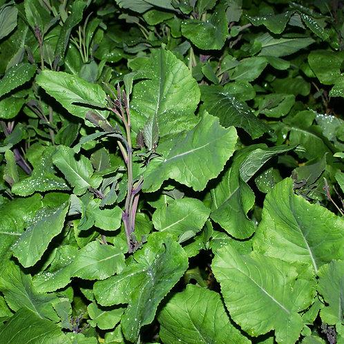Carbon (Mustard / Kale Hybrid Seed) (2kg per acre)