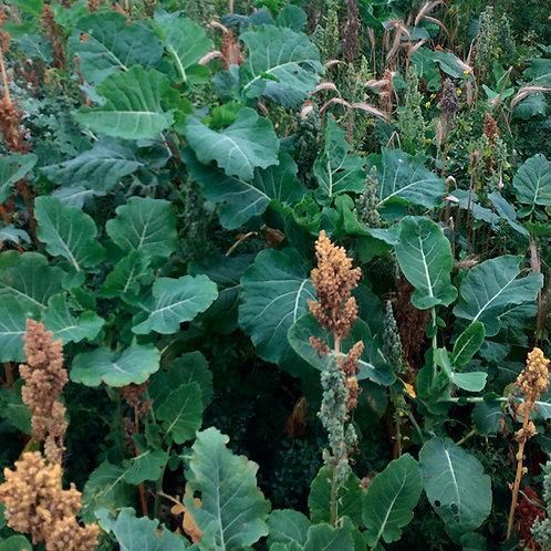 Kale & Quinoa Seed Mix (3kg per acre)