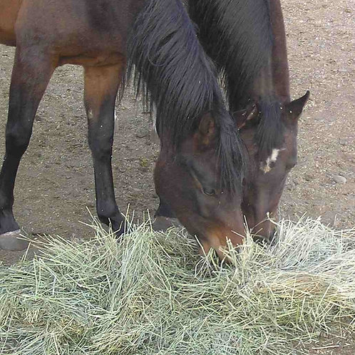HM.34 Premium Hay Maker Grass Seed Mix (Acre Pack)