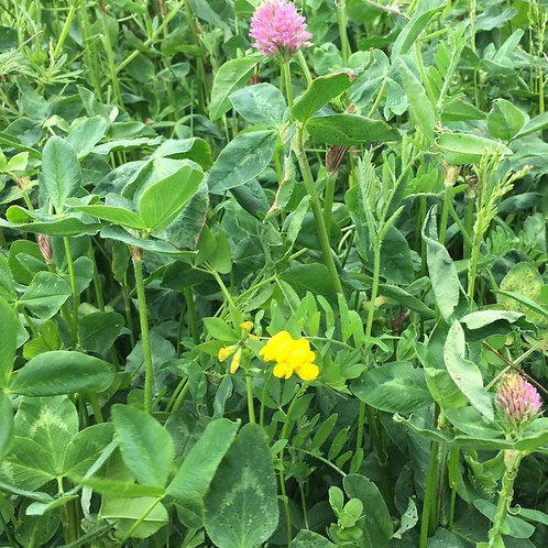 AB15 Two Year Sown Legume Fallow Seed Mix (2021 Spec) (8kg per acre)