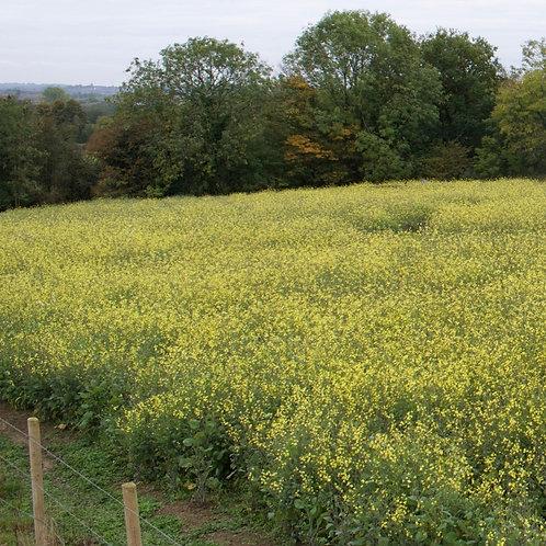 Biocarina Seed Mix (4kg per acre)