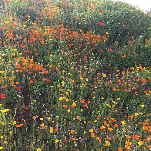 HC5 Kaleidoscope Wildflower Seed Mix 100%