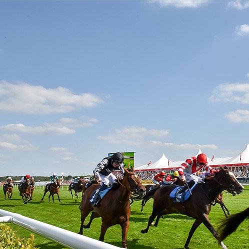 20kg - HRC.1 Premium Racecourse 100% Rye Grass Seed Mix (HRC1)
