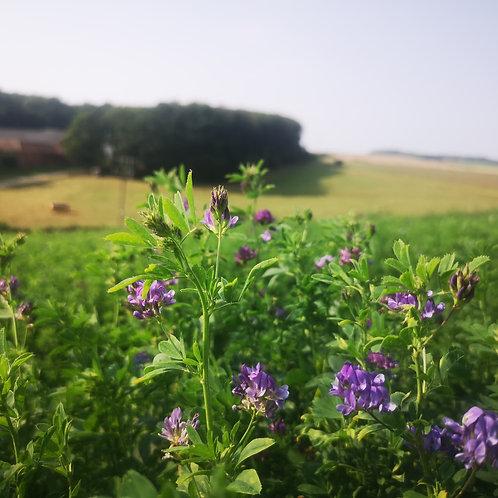 Organic Lucerne Seed Pre-Inoculated (Alfalfa) (8kg per acre)