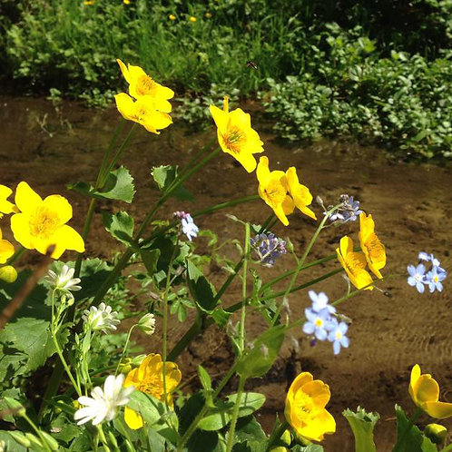 P2 Water Margins Wildflower Seed Mix 100%